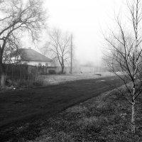 туманное утро :: ирина