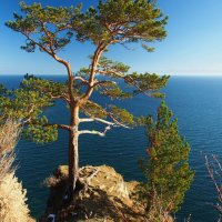 Осень на Байкале - просто красота:яркие деревья,синяя вода... :: Александр Попов