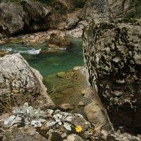 И на камнях растут цветы :: Marina Talberga