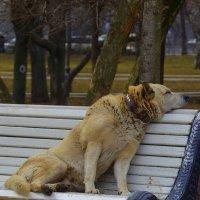Парк отдыха! :: Марина Юрочкина