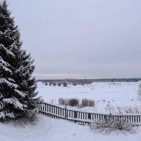 Графика ранней зимы :: Николай Туркин
