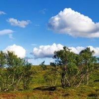 Из серии «Еще совсем немного на север и будет только мшистая тундра…» :: kolin marsh