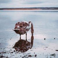 Питная вода Виштынца :: Игорь Вишняков