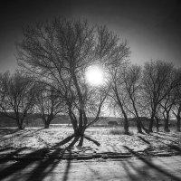 Алтайская зима :: polubedov mihail
