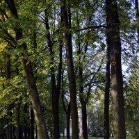 Деревья в парке :: Галина Galyazlatotsvet
