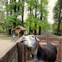 Мини-зоопарк на Елагином острове :: Валентина Жукова