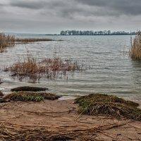 Хмурый день на заливе :: Владимир Самсонов