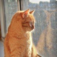 Кошка на окошке :: Elena Ignatova