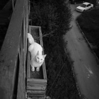 Отдых на балконе :: Екатерина Короткова