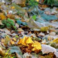 золотая осень :: Tiana Ros