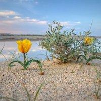 Весной :: Константин