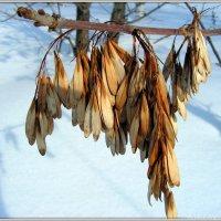 До весны склюют птахи.. :: Андрей Заломленков