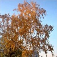 Золотая берёзка :: Нина Корешкова