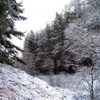 Овраг в зимнем лесу. :: Борис Митрохин