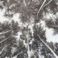 Сказочный лес :: Николай Варламов