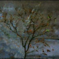 Осень. Последние листья. :: Григорий Кучушев
