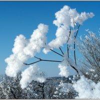 Ледяные цветы :: Андрей Заломленков