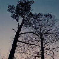 На закате :: Татьяна Белогубцева