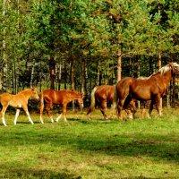 Кони, кони — вы сказка и песня.к вам любви объяснить не могу :: Светлана