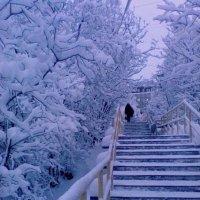 Зима :: Анна Приходько