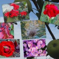 Времена года,краски октября... :: Тамара (st.tamara)