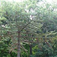 Ливадийский парк :: Наиля