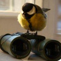 куда тут смотреть-то? :: linnud