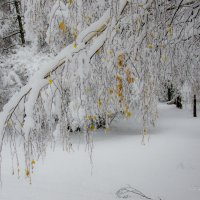 Листья жёлтые под снегом :: Вера
