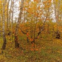 Осенние краски :: Сергей С
