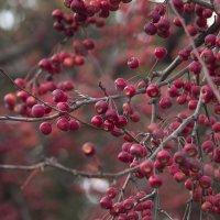 Яблочки созрели :: Sasha Bobkov