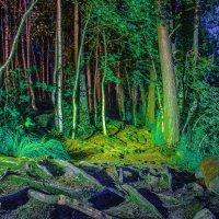 art лес :: Даниил pri (DAROF@P) pri