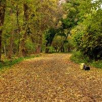 В Ташкентском ботаническом саду :: Светлана