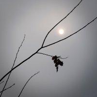 Ноябрьское солнце. :: Андрий Майковский