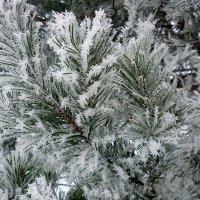 Про елочки-сосеночки и снежные звездочки.... :: Павлова Татьяна Павлова