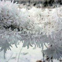 Снежные кружева :: Павлова Татьяна Павлова