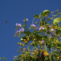 Цветок с плодами :: Александр Деревяшкин
