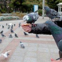 голуби :: elena manas