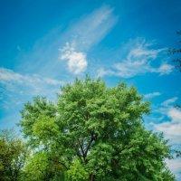 Дерево :: Дмитрий Мороз