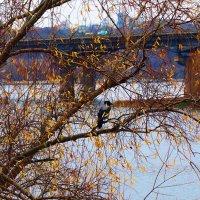 Осень на Днепре :: Владимир Бровко
