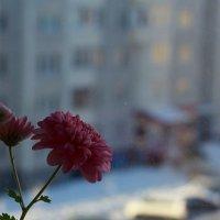 Воскресенье :: Виктор Коршунов