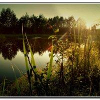 закат на пруду :: ВладиМер