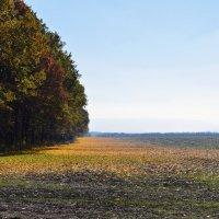 Осень :: Роман Небоян