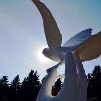 Птица Счастья :: Роман Небоян