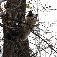 Вот такой вот кот :: Ann