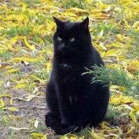 Жил да был черный кот! :: Наталья