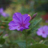 Цветы :: Надежда Горошко