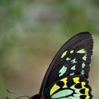 Бабочка :: Pawel Klotschkow