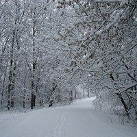 В зимнем лесу :: Сергей Михайлович