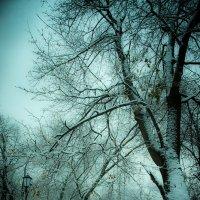 Снежное утро :: Игорь Герман