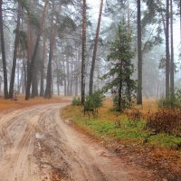 Спешит дорога к декабрю... :: Лесо-Вед (Баранов)